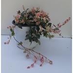 Jasmin rhyncospermum trachelospemum rempant tricolor - La jardinerie de pessicart nice - Livraison a domicile nice 06 plantes vertes terres terreaux jardinage arbres cactus