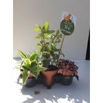 PROMO 3 plantes Pet Friendly 10€ La Jardinerie de Pessicart Nice 06100