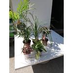 PROMO 5 plantes Pet Friendly 20 € La Jardinerie de Pessicart Nice 06100