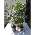 PROMO Trio de plantes dépolluantes - la jardinerie de pessicart nice 06100