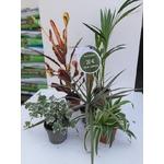 PROMO 5 plantes dépolluantes 20€ la Jardinerie de Pessicart Nice 06100