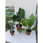 PROMO Trio de plantes Pet Friendly 25€ La Jardinerie de Pessicart Nice 06100