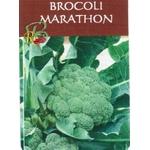 Brocoli Marathon - La Jardinerie de Pessicart Nice 06100