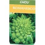 Chou Romanesco - La Jardinerie de Pessicart Nice 06100