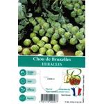 Choux de Bruxelles Heracles - La Jardinerie de Pessicart Nice 06100