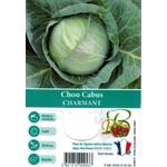 Choux Cabus Charmant La Jardinerie de Pessicart Nice 06100