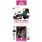 Hortensia Grimpant Hydrangea Winter Suprise