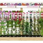 Plantes grimpantes Travers