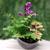 Composition fete des meres 2020 - la jardinerie de pessicart - coupe de verre orchidee phalaenopsis fougere adiantum coleus  (1)