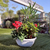 Composition Masséna - Toussaint - La jardinerie de pessicart Nice (2)