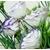 eustoma - Photo credit ekenitr on Visualhunt.com - La jardinerie de pessicart nice - Livraison a domicile nice 06 plantes vertes terres terreaux jardinage arbres cactus