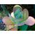 Kalanchoe thyrsifolia 3 - Photo credit M.P.N.texan on Visualhunt.com - La jardinerie de pessicart nice - Livraison a domicile nice 06 plantes vertes terres terreaux jardinage arbres cactus