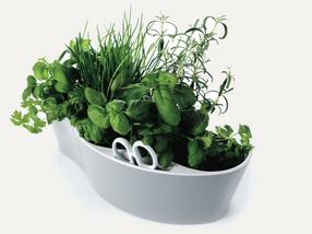 herbes-aromatiques