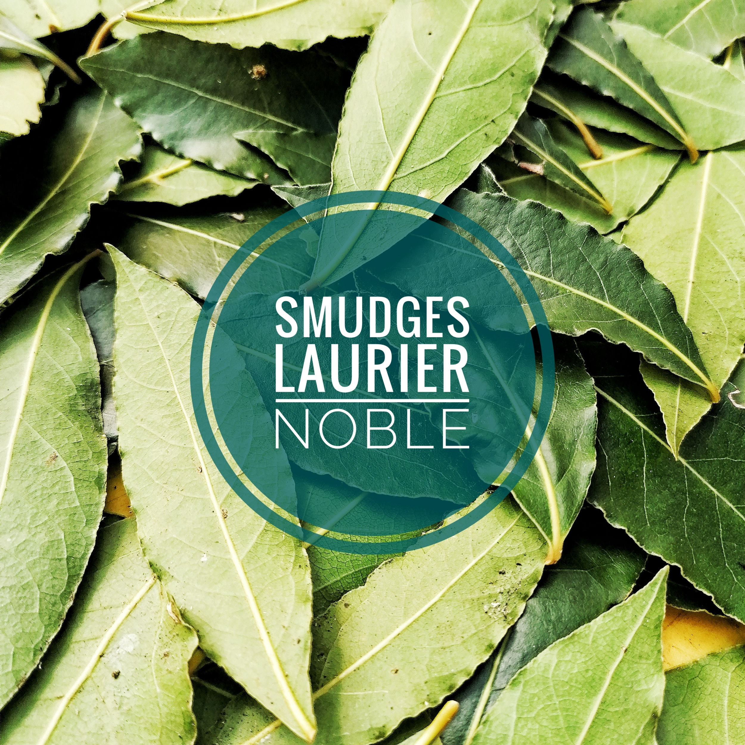 Mini Smudge Laurier noble - Sagesse Clairvoyance & Protection