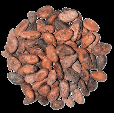 fèves_de_cacao_crues