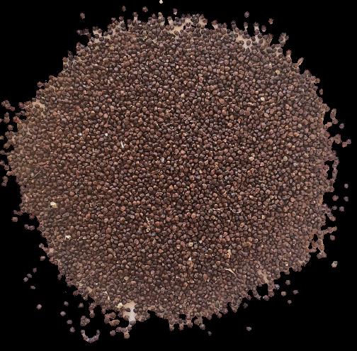 maniguette-graines-kalô
