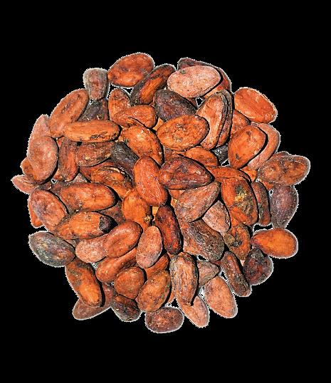 Fèves-cacao-kalô