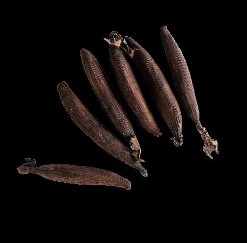 jujube-africain-kalô