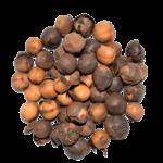 rondelle-arbre-à-ail-kalô