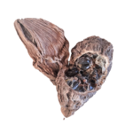 cardamome-noire-kalô