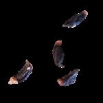 cardamome-noire-3
