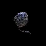 poivre-cubèbe-2