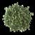 feuilles-moringa-kalô