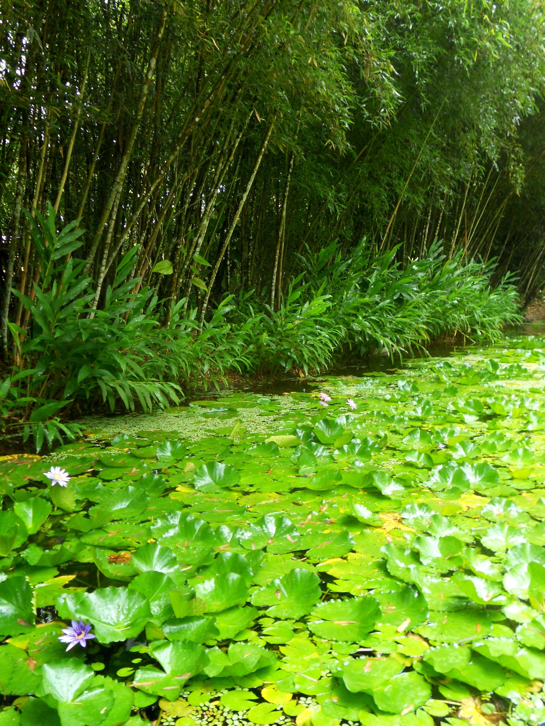 affiche photo poster à encardrer nature arbre zen méditation bambou nénuphar