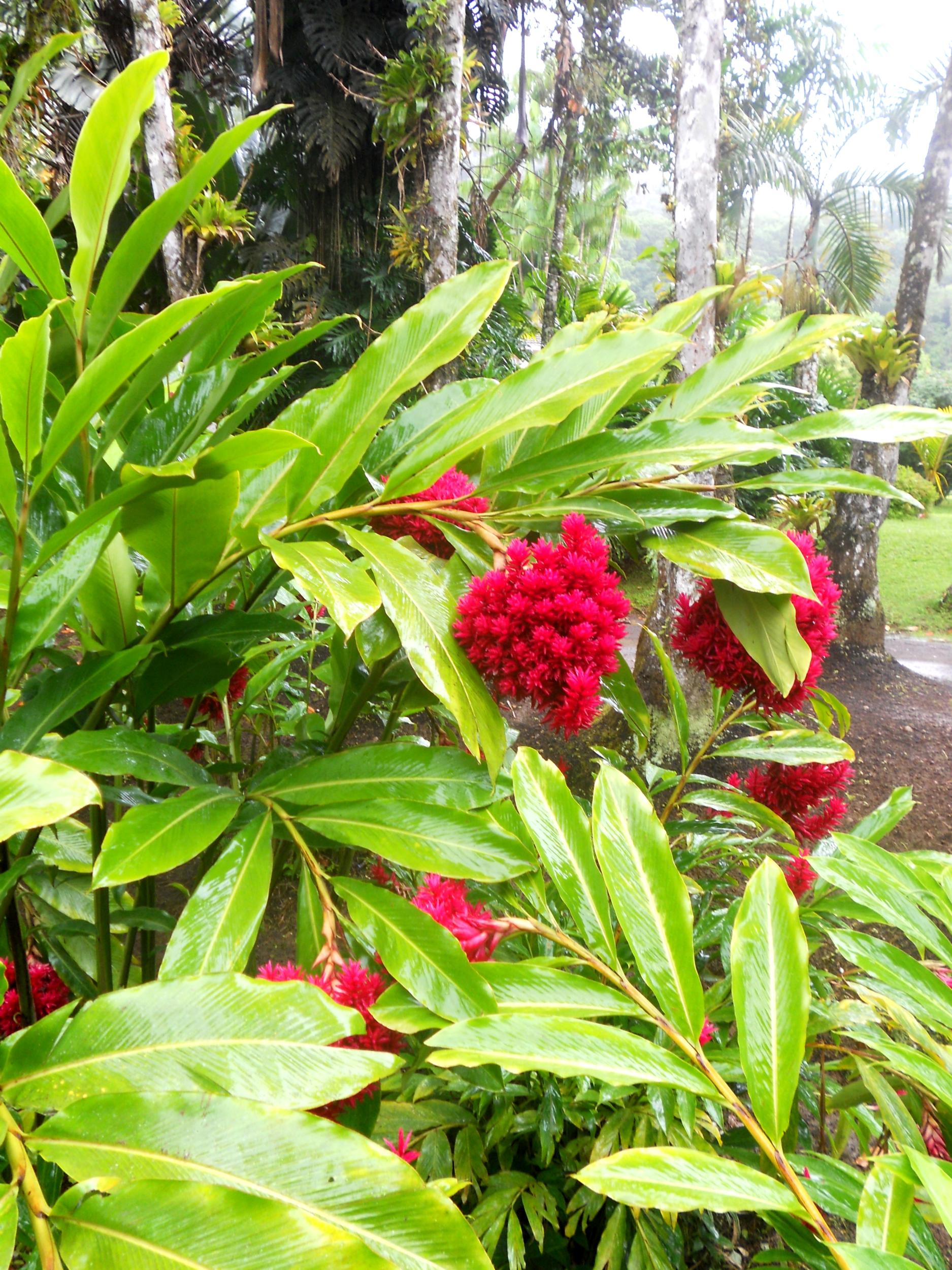 affiche photographie à encadrer nature fleurs exotique framboise