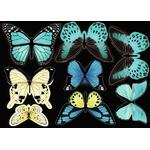 CO168C_det-papillons2
