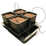 Wilma 4 Plantes Système Complet