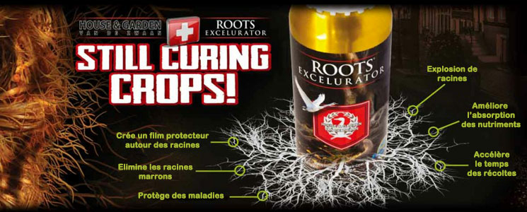 Root Excellurator