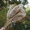 Herbe De La Pampa Artificielle Brun | Branche Artificielle | Plante Artificielle | Bouqueternel