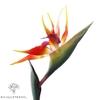 Plante Artificielle Oiseau du Paradis Rouge Orange   Fleurs Artificielles   Fleurs Artificielles Oiseau de Paradis   Bouqueternel