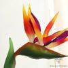 Oiseau de Paradis Artificiel Pas Cher Orange | Fleurs Artificielles | Fleurs Artificielles Oiseau de Paradis | Bouqueternel