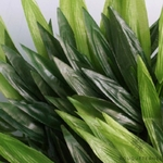 Tiges de Bambou Artificiels dExtérieur | Branche Artificielle | Plante Artificielle | Bouqueternel