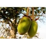 Poudre de baobab Baomix Biologiquement _ Baobabs