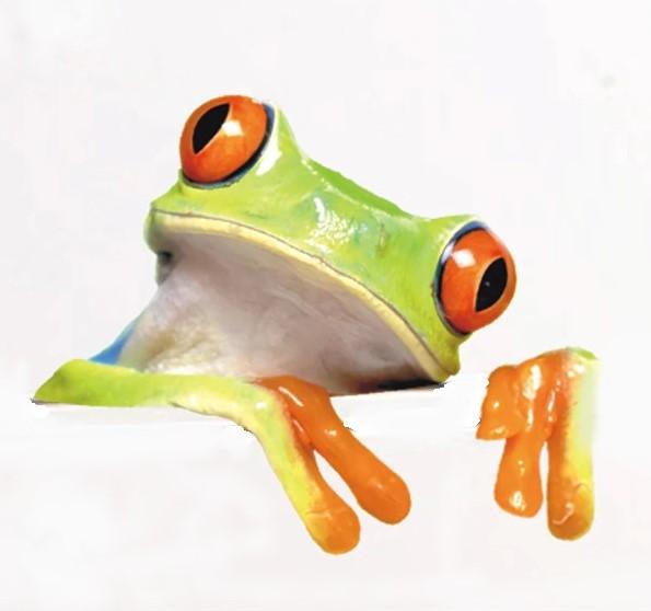 Sticker Tête de grenouille