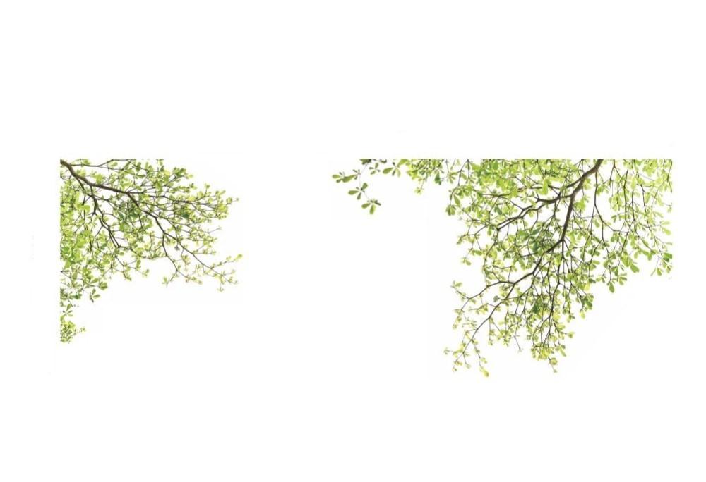 Sticker Branches d arbre feuilles vertes