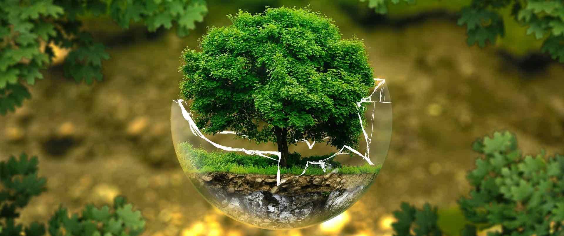 arbre qui symbolise la preservation de l environnement