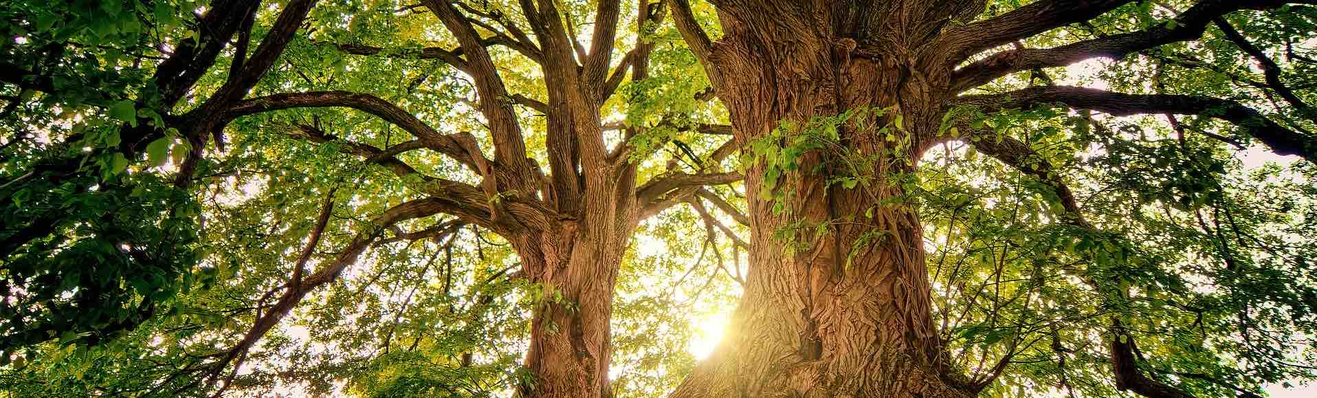 arbres avec du soleil