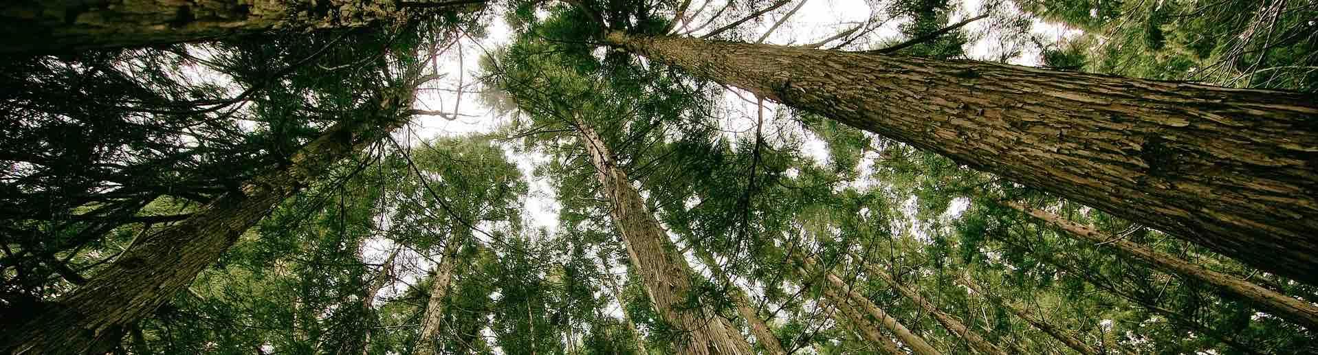 foret avec des arbres