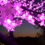 arbre lumineux led cerisier 200 cm  vendu sur www.deco-lumineuse.fr