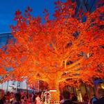 guirlande lumineuse led orange serie coeur raccordable 10m 80 m 800 led vendue sur deco-lumineuse.fr