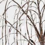 arbre led lumineux pour exterieur saule pleureur eteint 2M 512 LEDs vendu sur deco-lumineuse.fr
