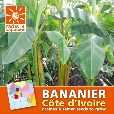 Graines de bananier ornemental en sachet