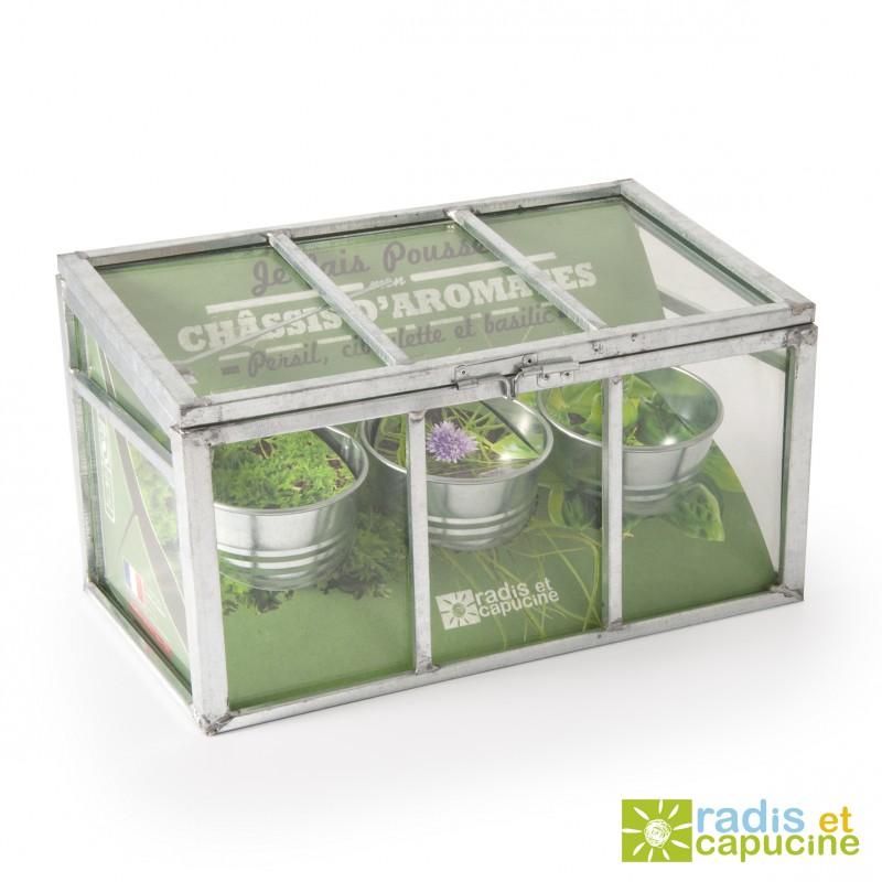 Serre en verre avec châssis avec graines de plantes aromatiques bio
