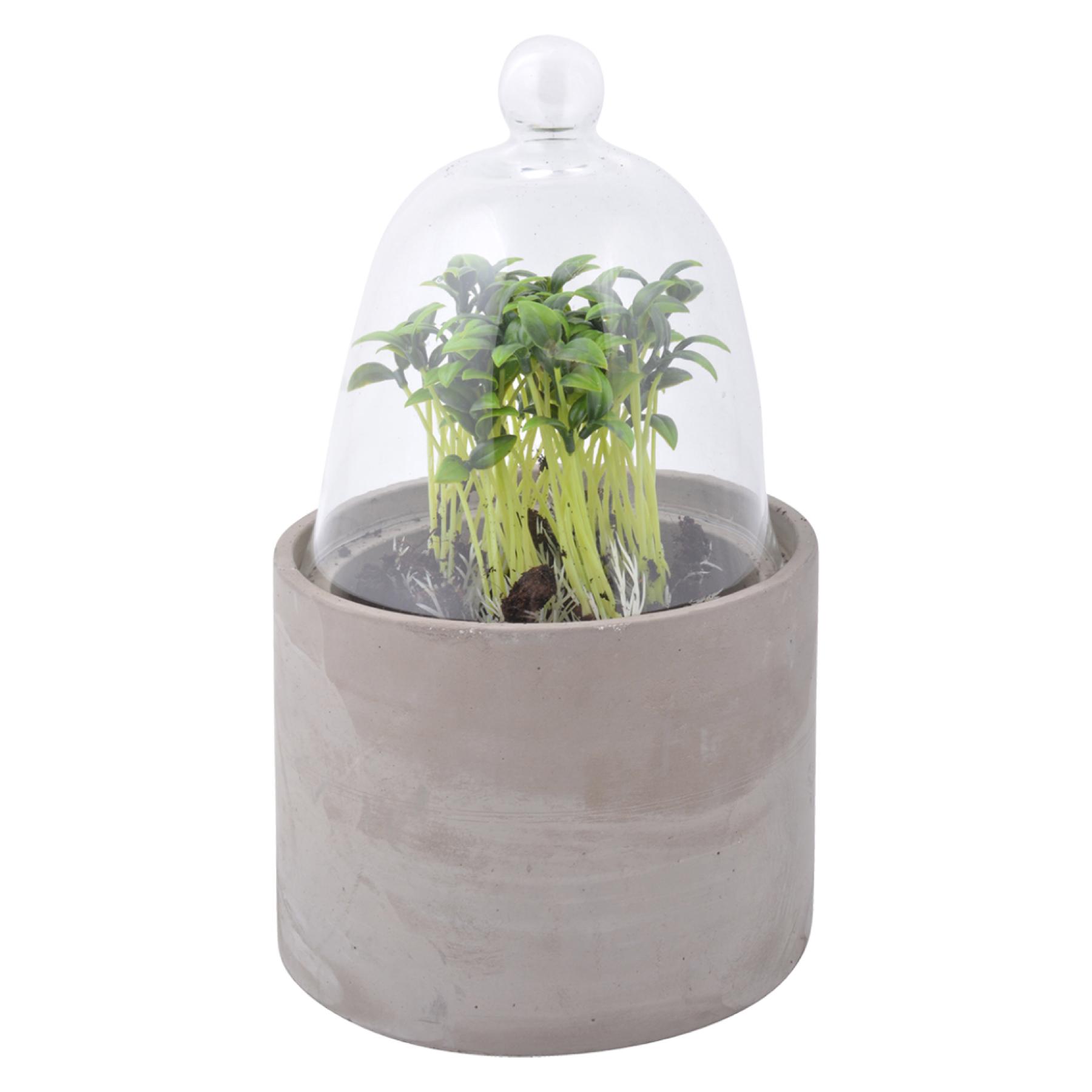 Terrarium cache-pot en béton et verre