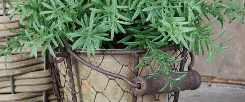 esschert design cache pot plante grillage
