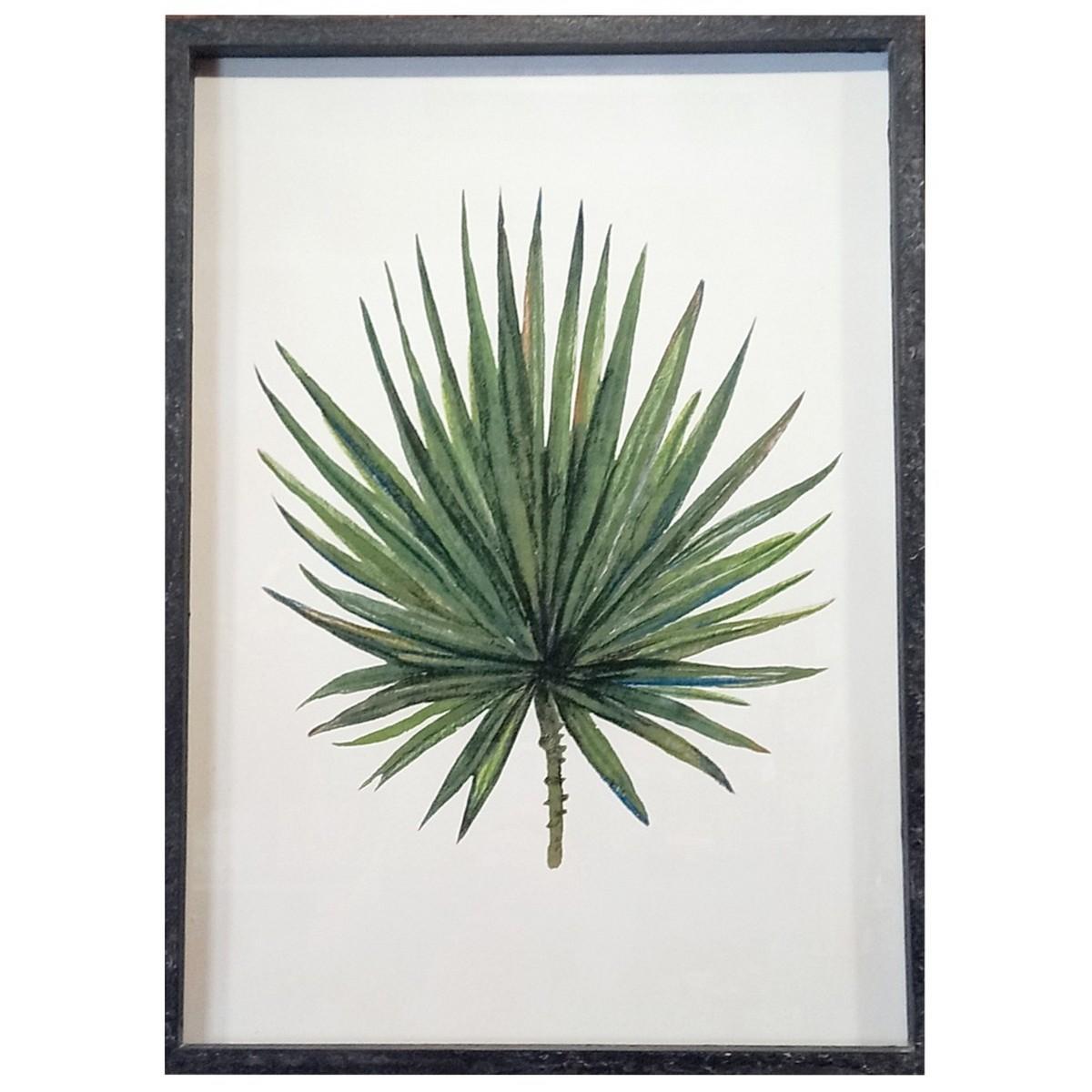 Tableau herbier feuille de palmier chamaerops